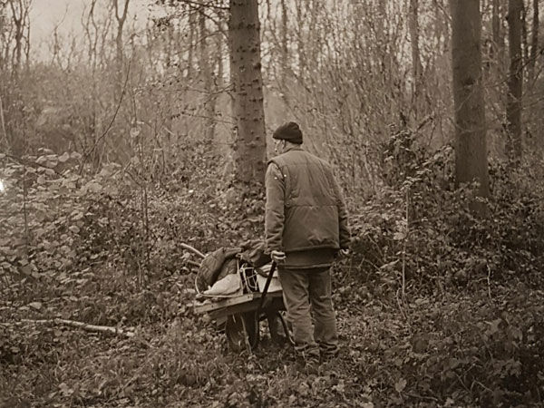 Coppicing past