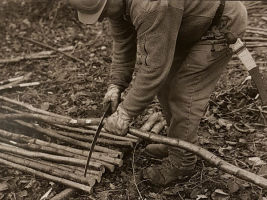 Coppicing and firewood in the present